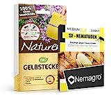 Nemagro KOMBIPACK gegen Trauermücken SF-Nematoden M + Naturen Gelbtafeln - Für 15 Pflanzen